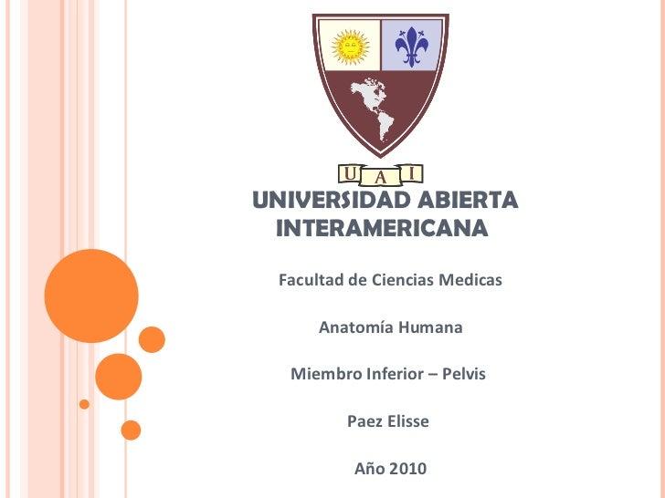 UNIVERSIDAD ABIERTA INTERAMERICANA  Facultad de Ciencias Medicas Anatomía Humana Miembro Inferior – Pelvis  Paez Elisse  A...