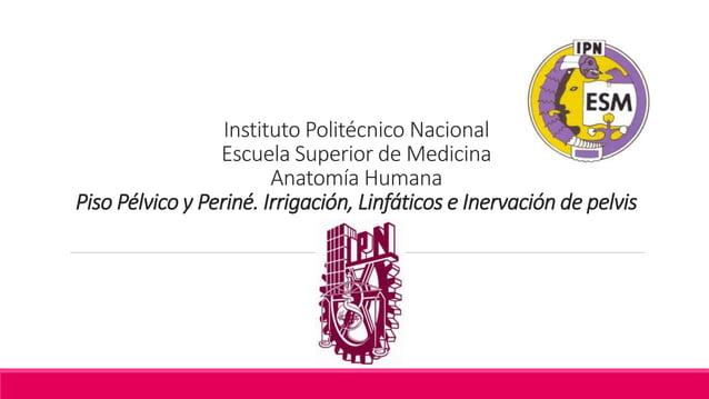 Instituto Politécnico Nacional Escuela Superior de Medicina Anatomía Humana Piso Pélvico y Periné. Irrigación, Linfáticos ...