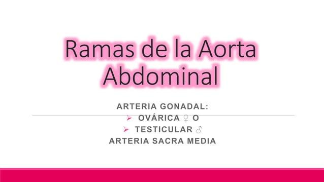 Rama Ovárica: que irriga al Ovario Rama Tubárica: que irriga la trompa Uterina Anastomosis: con las ramas correspondiente ...