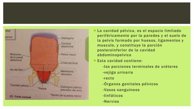 La cavidad pélvica tiene: -Una pared anteroinferior -Dos paredes laterales -Una pared posterior -Un suelo