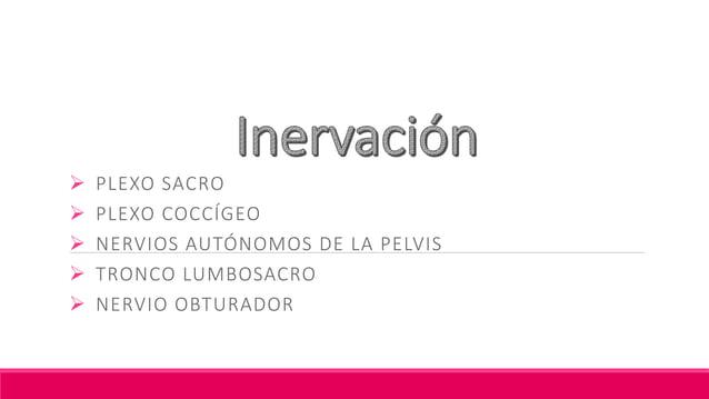 Nervio Pudendo Formado por: S2, S3, S4 Nervio principal para la inervación del Periné y el principal sensitivo para de lo...