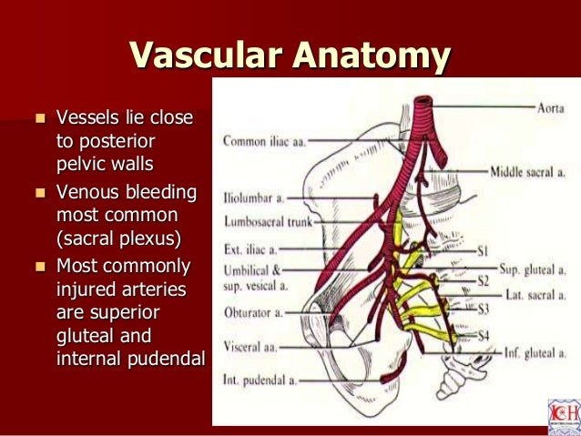 Pelvis acetabulum - anatomy , imaging , classification