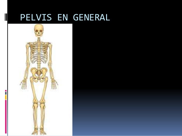 PELVIS EN GENERAL