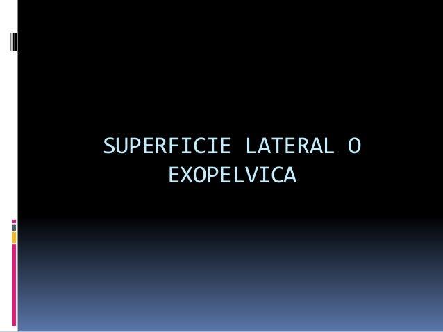 SUPERFICIE LATERAL O EXOPELVICA