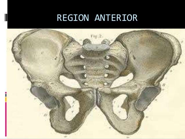 REGION ANTERIOR