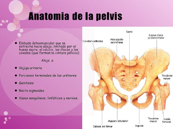 Pelvis normal y fisiologia de parto normal