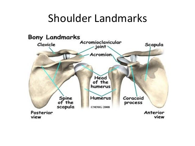 Shoulder bony anatomy