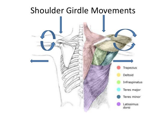 Shoulder movements anatomy