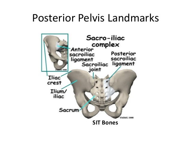 Pelvis Shoulder Anatomy