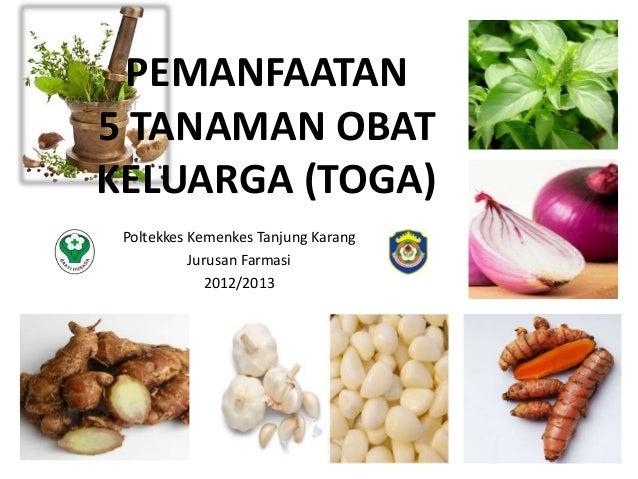 PEMANFAATAN 5 TANAMAN OBAT KELUARGA (TOGA) Poltekkes Kemenkes Tanjung Karang Jurusan Farmasi 2012/2013