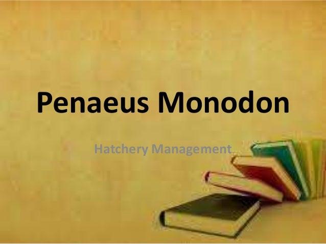 Penaeus Monodon Hatchery Management