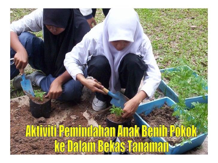 Aktiviti Pemindahan Anak Benih Pokok  ke Dalam Bekas Tanaman
