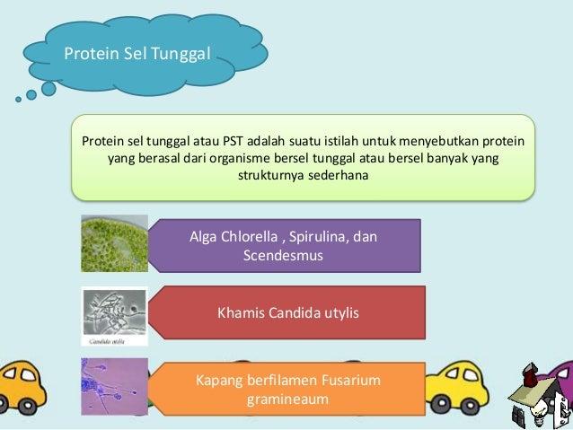 Protein sel tunggal something protein sel tunggal perkembangan protein sel tunggal by bioteknologi pengolahan bahan pangan ccuart Images