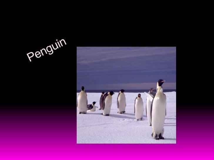 Penguin<br />