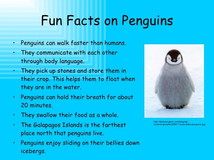 a brief description of penguin species in southern hemisphere Where do penguins live unless it is a galapagos penguin (spheniscus mendiculus), none of the penguin species reach the northern hemisphere, since they are birds that live only in the southern hemisphere.