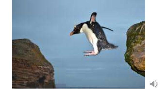 Penguinsrock