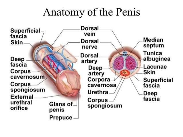 Penile Reconstruction Dr Vipin V Nair