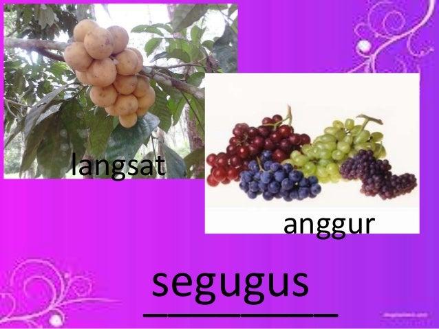 89 Gambar Segugus Anggur Terbaik