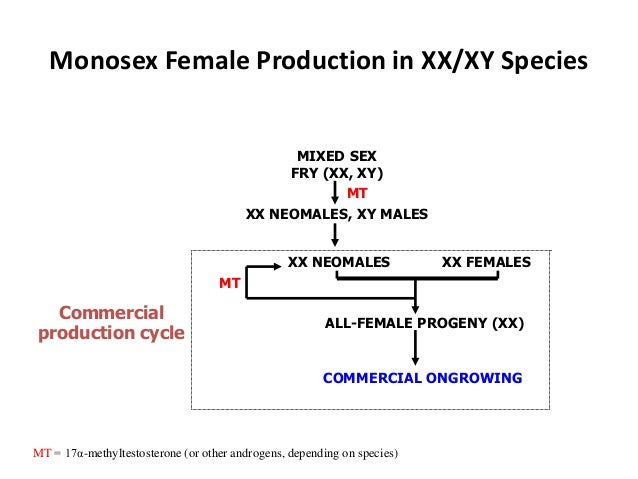 Monosex Female Production in XX/XY Species XX FEMALES ALL-FEMALE PROGENY (XX) COMMERCIAL ONGROWING XX NEOMALES MIXED SEX F...