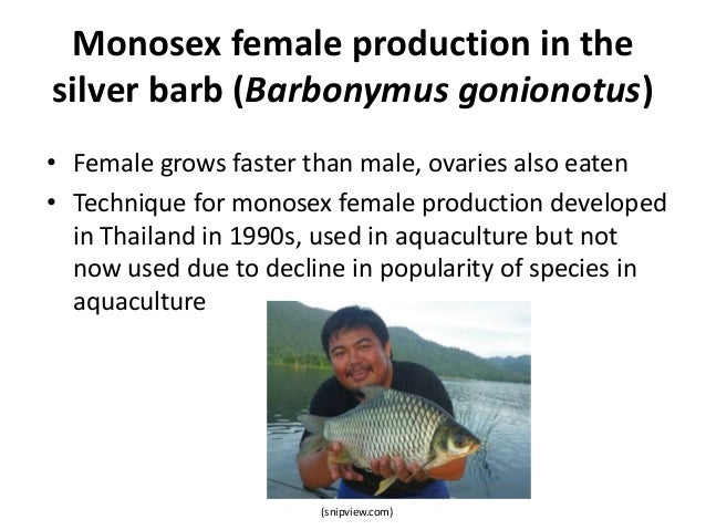 Monosex female production in the silver barb (Barbonymus gonionotus) • Female grows faster than male, ovaries also eaten •...