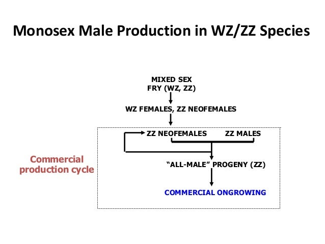 """Monosex Male Production in WZ/ZZ Species ZZ MALES """"ALL-MALE"""" PROGENY (ZZ) COMMERCIAL ONGROWING ZZ NEOFEMALES MIXED SEX FRY..."""