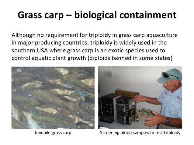 Grass carp – biological containment Although no requirement for triploidy in grass carp aquaculture in major producing cou...