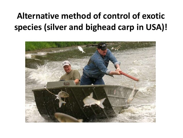 Alternative method of control of exotic species (silver and bighead carp in USA)!