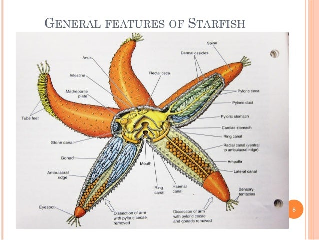 Pentaceros starfish biodiversity animal science zoology