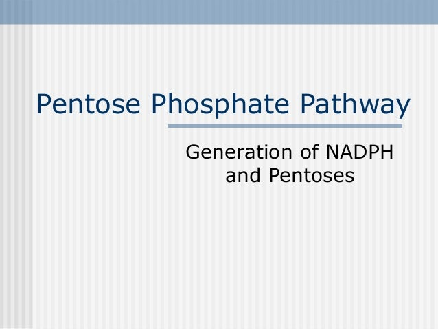 Pentose Phosphate Pathway Generation of NADPH and Pentoses