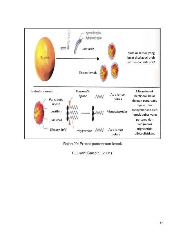Pengertian Metabolisme Lipid Serta Fungsi dan Proses yang Terjadi