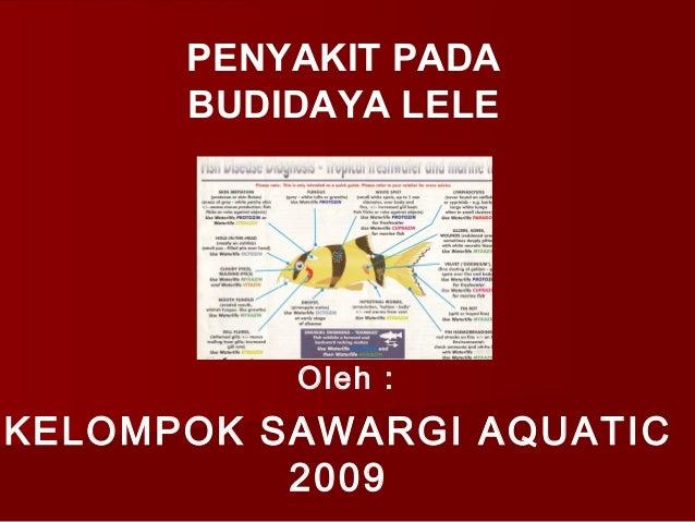 Oleh :KELOMPOK SAWARGI AQUATIC2009PENYAKIT PADABUDIDAYA LELEOleh :
