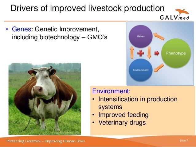 livestock or livelihood Expression of interest: project manager livestock and dairy (africa and asia), the hague snv netherlands development organisation updated: 2018-03-27t09:38:56z.