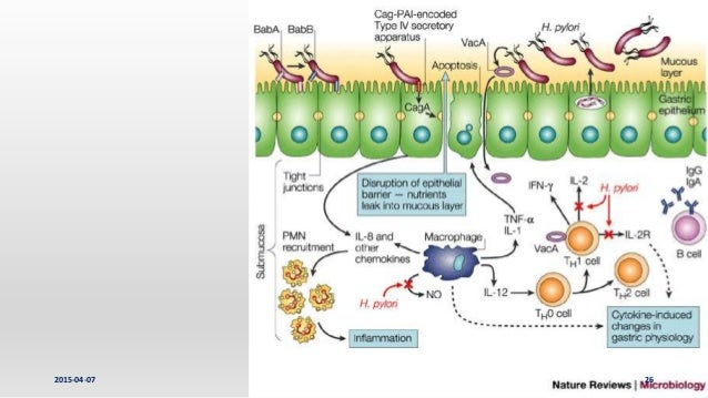 Nature Reviews Cell Junction