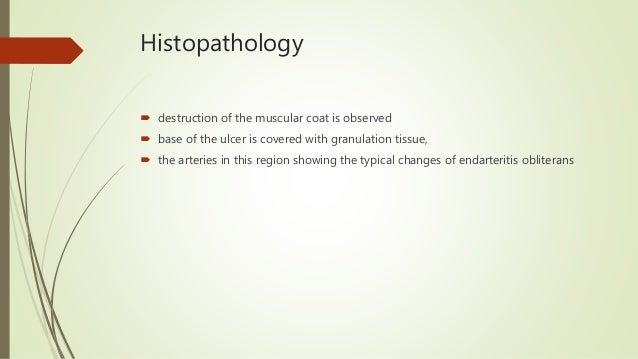 Histopathology  destruction of the muscular coat is observed  base of the ulcer is covered with granulation tissue,  th...