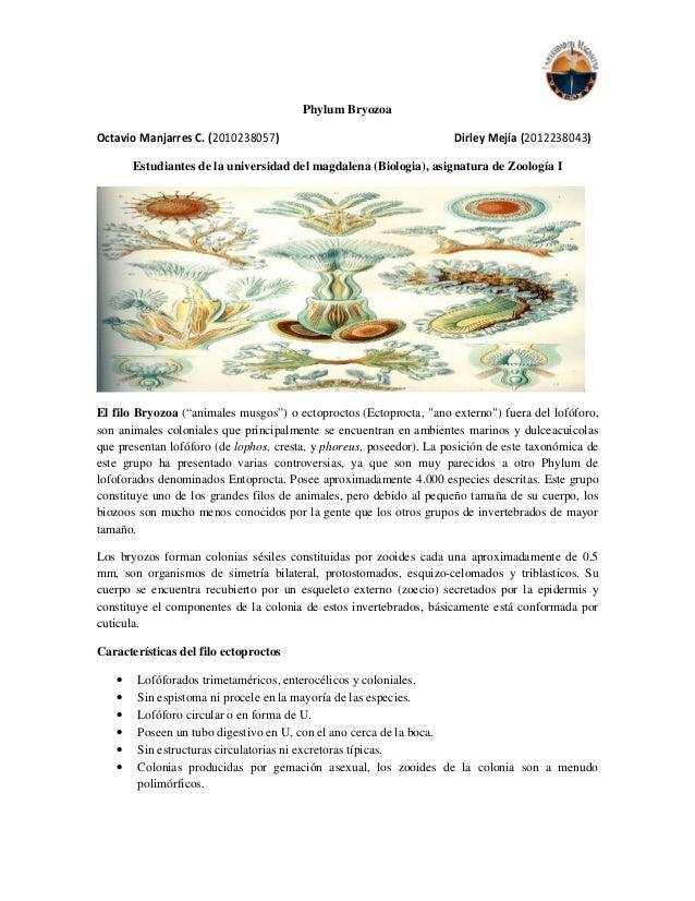 Phylum Bryozoa Octavio Manjarres C. (2010238057) Dirley Mejía (2012238043) Estudiantes de la universidad del magdalena (Bi...