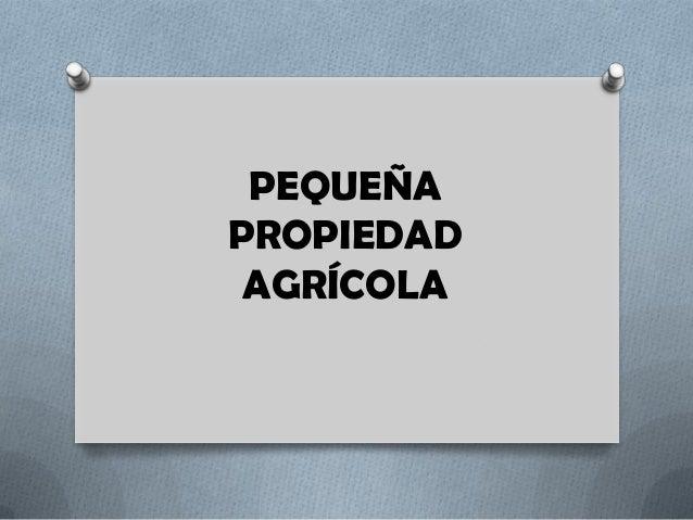 PEQUEÑA PROPIEDAD AGRÍCOLA