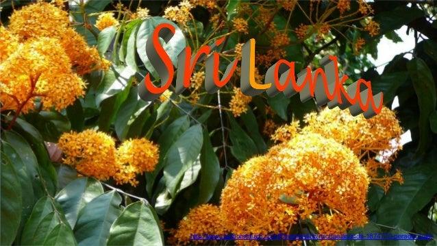 http://www.authorstream.com/Presentation/michaelasanda-1874770-peradeniya6/