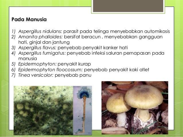Peranan fungi yang merugikan