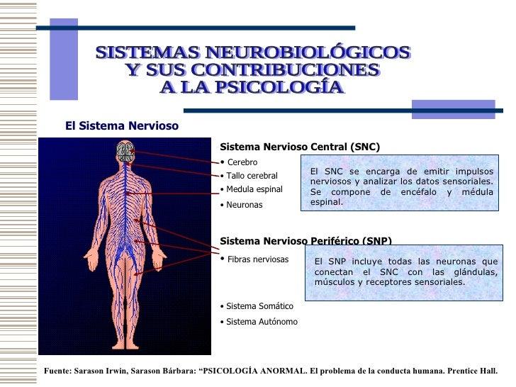 SISTEMAS NEUROBIOLÓGICOS  Y SUS CONTRIBUCIONES  A LA PSICOLOGÍA  El Sistema Nervioso  <ul><li>Sistema Nervioso Central (SN...