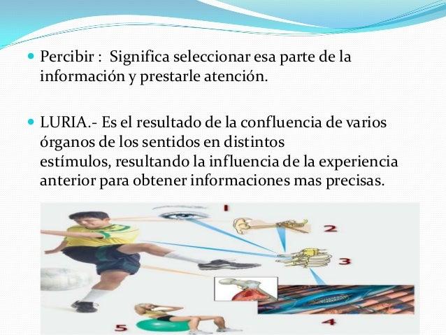  Percibir : Significa seleccionar esa parte de la información y prestarle atención.  LURIA.- Es el resultado de la confl...