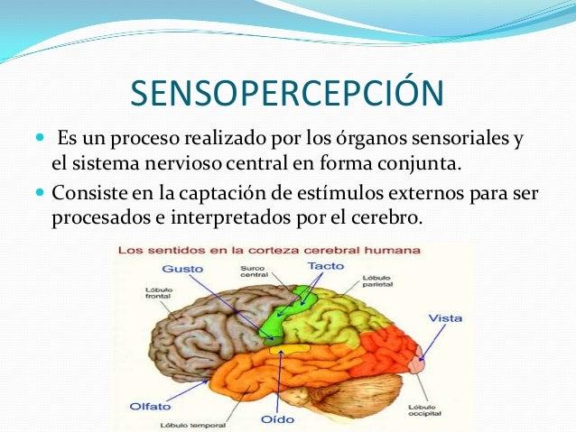SENSOPERCEPCIÓN  Es un proceso realizado por los órganos sensoriales y el sistema nervioso central en forma conjunta.  C...