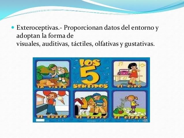  Exteroceptivas.- Proporcionan datos del entorno y adoptan la forma de visuales, auditivas, táctiles, olfativas y gustati...