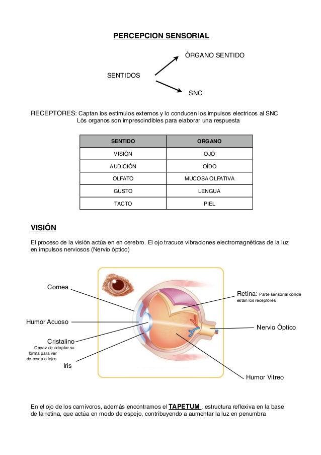 Percepcion sensorial ( Perros y gatos )