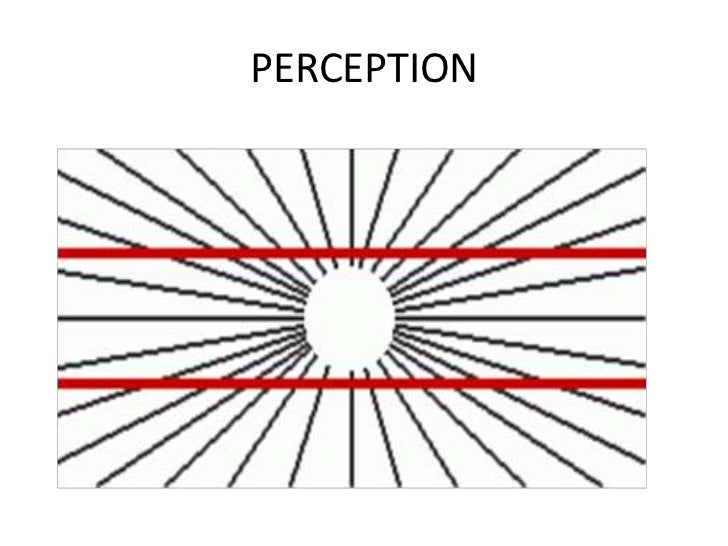 perception ppt new Transduction of Pain the radiating lines influence our perception of the parallel lines