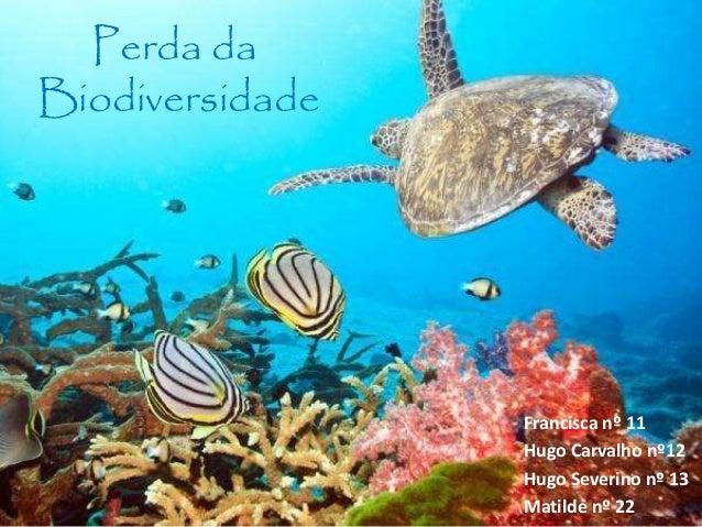 Perda da Biodiversidade Francisca nº 11 Hugo Carvalho nº12 Hugo Severino nº 13 Matilde nº 22