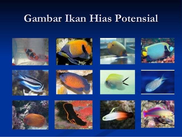 Perdagangan Ikan Hias Laut Di Indonesia Cahaya Baru