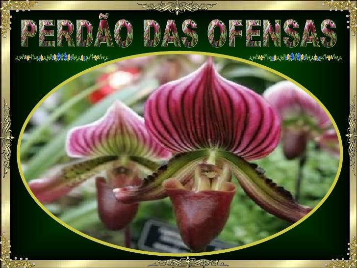 PERDÃO DAS OFENSAS