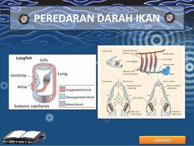 sistem Peredaran darah hewan