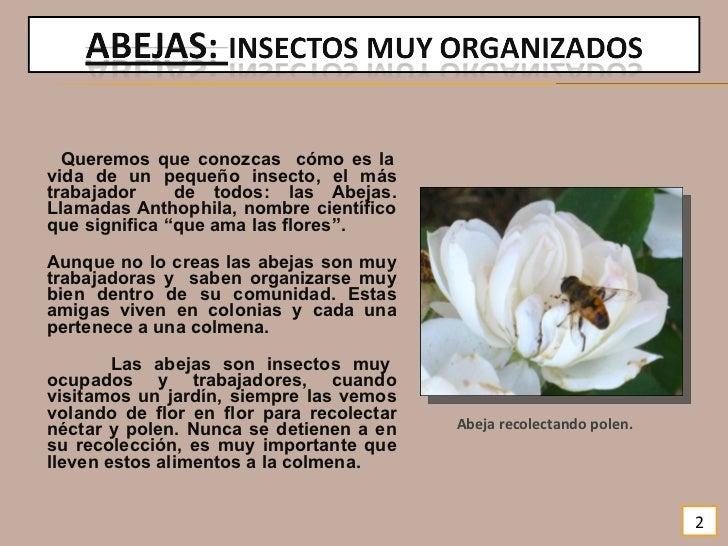 La vida de las abejas for Ahuyentar abejas jardin