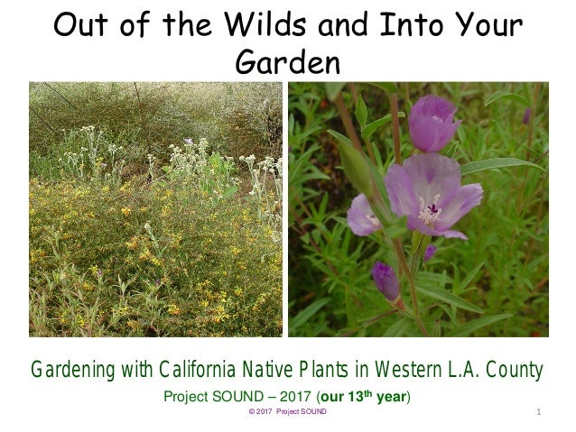 © 2017 Project SOUND Out of the Wilds and Into Your Garden Gardening with California Native Plants in Western L.A. County ...